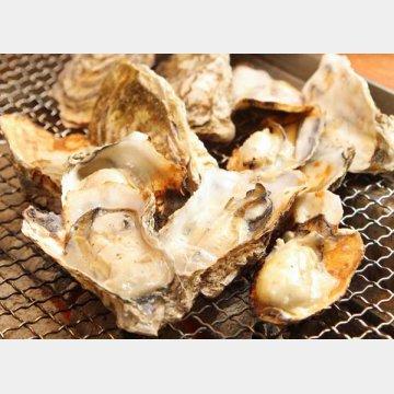 ウイルス汚染海域でとれた二枚貝もアブナイ