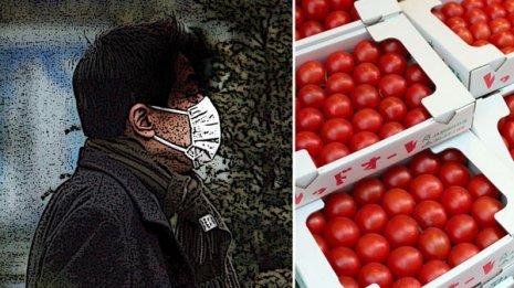 スギ花粉症はトマトで悪化?