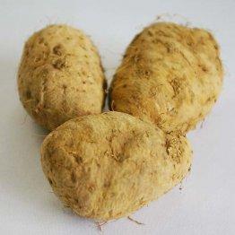 沖縄県のクーガ芋