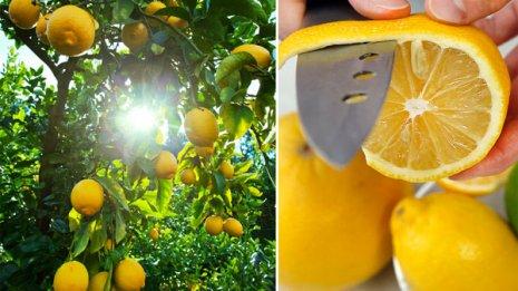 """ぬるま湯に絞り飲むだけ """"ひと肌レモン""""効果を専門家解説"""