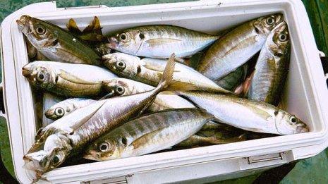 認知症対策に役立つDHA・EPA 魚食べるなら刺身か塩焼きか