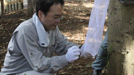 蚊による感染症を防ぐ 3年前にはデング熱の国内感染者