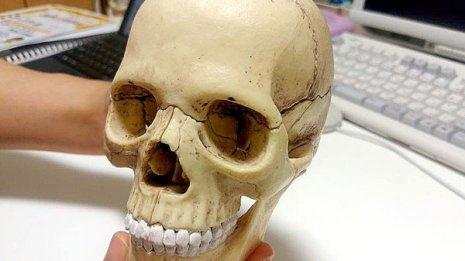 頭蓋骨も年を取る(写真はイメージ)