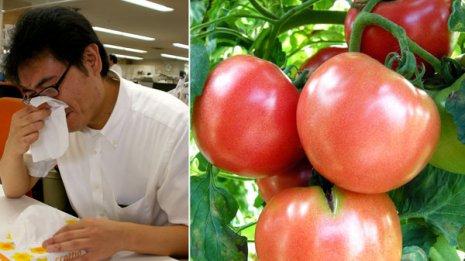 トマトはスギ花粉と相性が悪い