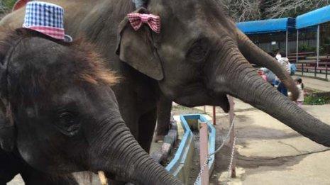 <2>象がほとんどがんにならないのはなぜ?
