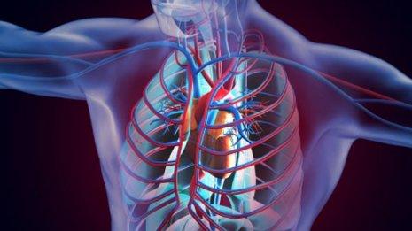 【血管拡張ホルモン】ポンプ役の心臓は内分泌臓器でもある