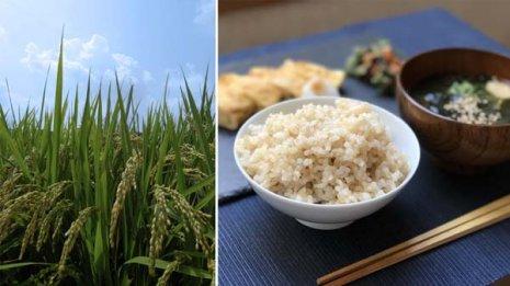 お米のデンプン成分が便秘解消や大腸がん予防に働きかける