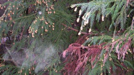 免疫の過剰反応を抑制 「花粉症にはビタミンD」は本当か?