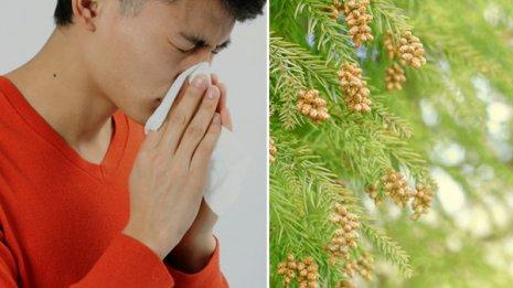 「小青竜湯」は鼻炎症状の6割を改善 花粉症にも効果的