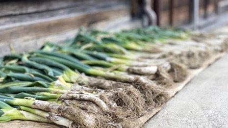 """冬が旬の長ねぎには""""風邪予防""""に役立つ栄養素がてんこ盛り"""