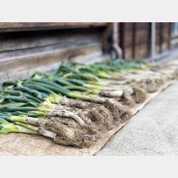 積極的にとりたい冬野菜