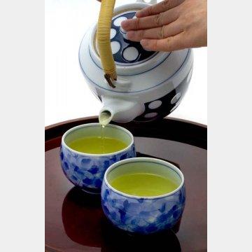 お茶に含まれるカテキンには強い抗ウイルス作用が