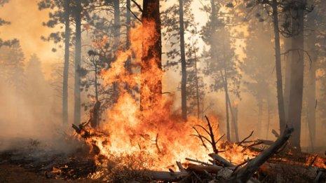コロナ感染の危険大?西海岸の山火事でリスク増す呼吸器疾患