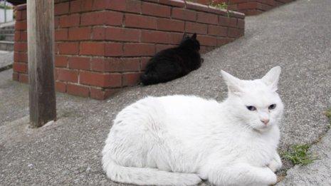 がん克服した専門医が推奨 がんの不安は「猫目線」で軽くなる