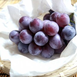 植物由来の色素が有効 ブドウやイチゴが大腸を健康にする