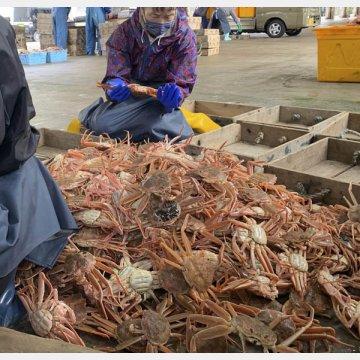 ズワイガニ漁が解禁された