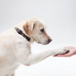 糖尿病の犬を飼っている人は同じく糖尿病になりやすい?