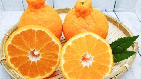デコポンは朝に生ジュースで ビタミンCがミカンの1.6倍