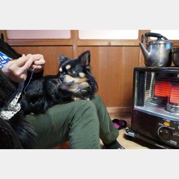 在宅医療ならペットと一緒に生活できる