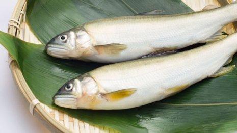 アユは「天然」と「養殖」で含まれる栄養成分が大きく違う