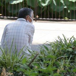 なぜ公園でくつろぐ高齢者は蚊に刺されてもかゆく感じないのか