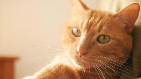 【動物咬傷】ネコにひっかかれて発症したら破傷風の予防を